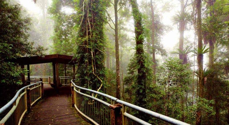 Dorrigo rainforest walk in the Dorrigo mountains