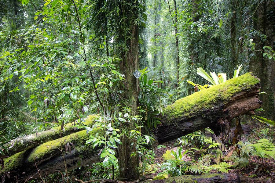 Dorrigo National Park Rainforest Walk