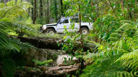 Orara Escarpment 4WD Touring Route