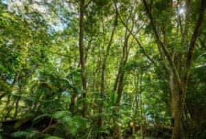 The Rainforest suite at Hermes Estate Villa